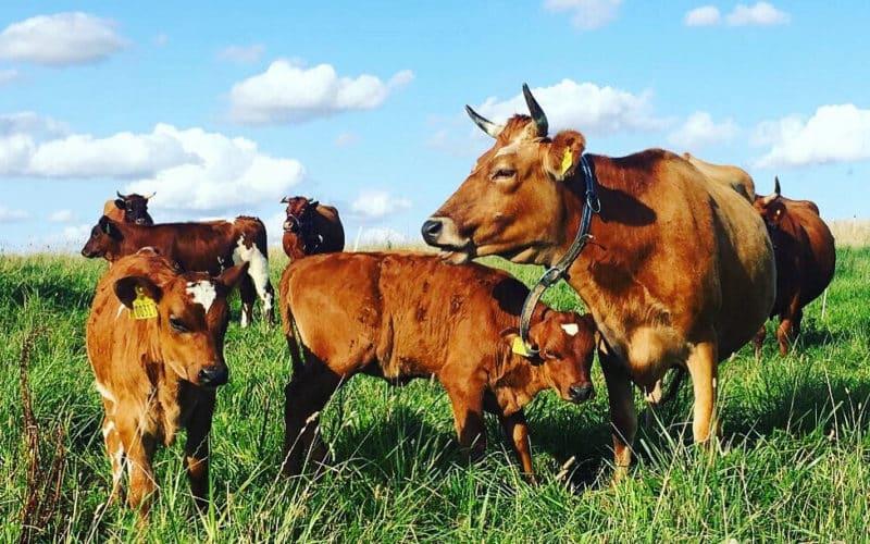 Oplev ostens mangfoldige verden med Ost & ko og Mejeriforeningen på Madland 2020